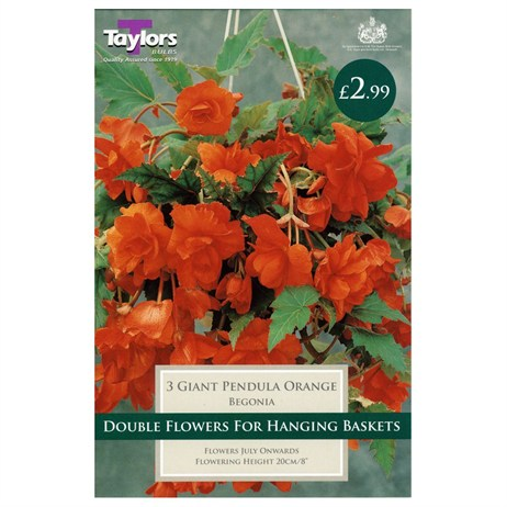 Taylors Bulbs Begonia Orange Giant Cascading (3 Pack) (TS223)