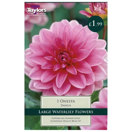 Taylors Bulbs Dahlia Onesta (Single Pack) (TS337)