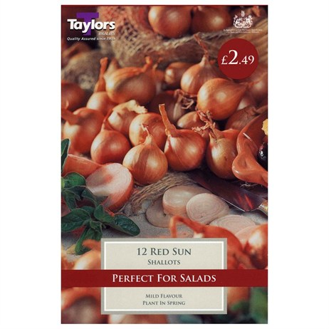 Taylors Bulbs Shallot Red Sun (12 Pack) (VP330)