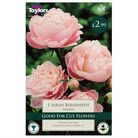 Taylors Bulbs Paeonia Sarah Bernhardt (Single Pack) (TS845)