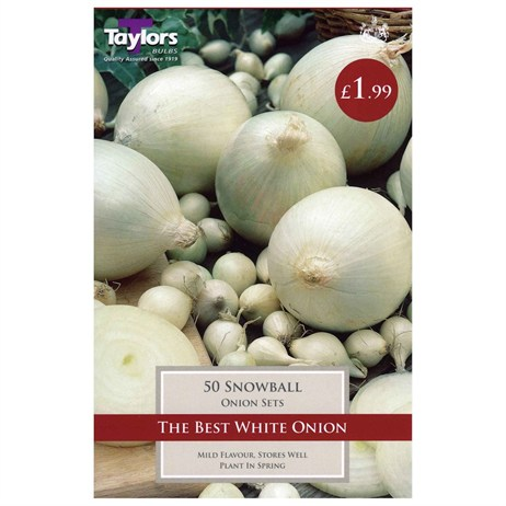 Taylors Bulbs Onion Snowball (50 Pack) (VP240)