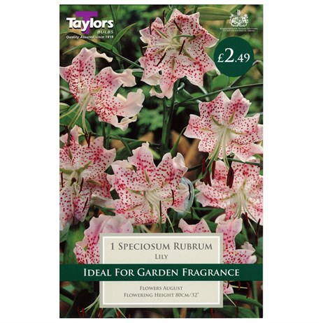 Taylors Bulbs Lily Speciosum Rubrum (2 Pack) (TS559)