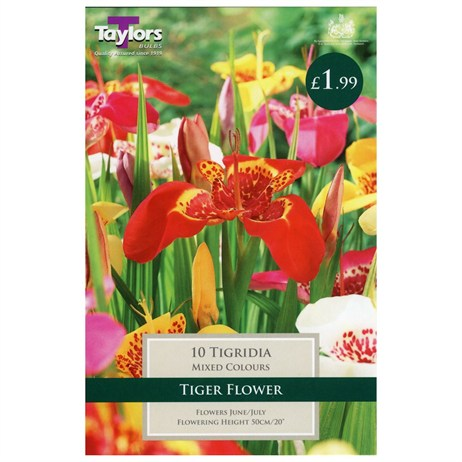 Taylors Bulbs Tigridia (Tiger Flower) (10 Pack) (TS795)