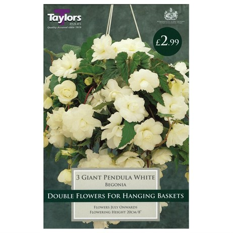 Taylors Bulbs Begonia White Giant Cascading (3 Pack) (TS229)