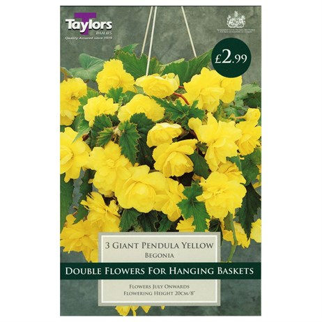Taylors Bulbs Begonia Yellow Giant Cascading (3 Pack) (TS231)