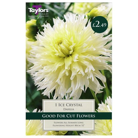 Dahlia Ice Crystal (Single) - Taylors Bulbs (TS485)