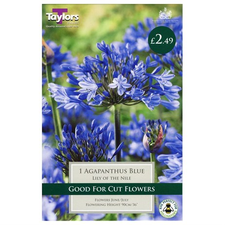 Taylors Bulbs Agapanthus Blue (Lily Of The Nile) (Single Pack) (TS801)
