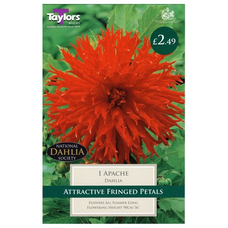 Taylors Bulbs Dahlia Apache (Single Pack) (TS303)