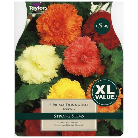 Taylors Bulbs Begonia Prima Donna Mixed (5 Pack) (XL525)