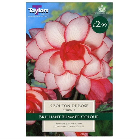 Taylors Bulbs Begonia Bouton De Rose Exotic (3 Pack) (TS245)