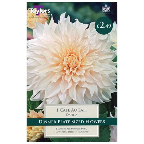 Taylors Bulbs Dahlia Cafe Au Lait (Single Pack) (TS497)