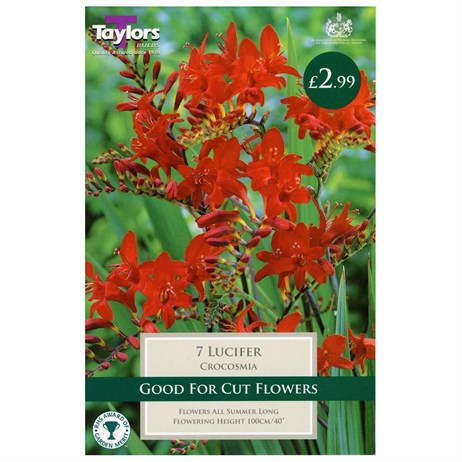 Taylors Bulbs Crocosmia Lucifer (7 Pack) (TS667)