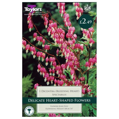 Taylors Bulbs Dicentra Spectabilis (Single Pack) (TS825)