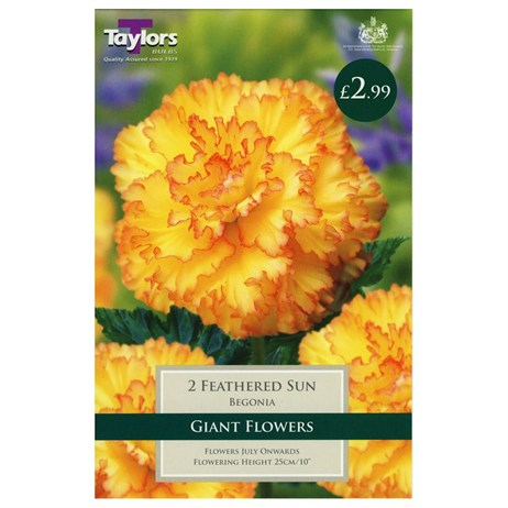 Taylors Bulbs Begonia Feathered Sun Exotic (2 Pack) (TS248)