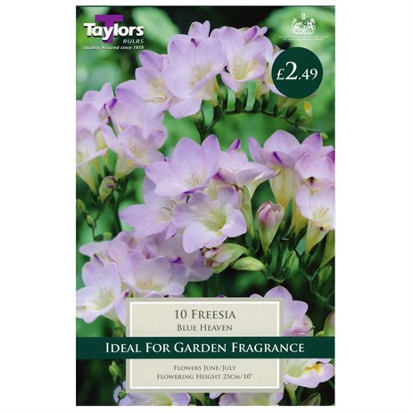 Freesia Blue Heaven (Pack of 10) - Taylors Bulbs (TS681)