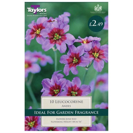 Taylors Bulbs Leucocoryne Andes (10 Pack) (TS754)