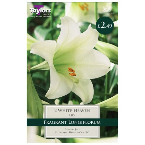 Lily White Heaven (Pack of 2) - Taylors Bulbs (TS552)