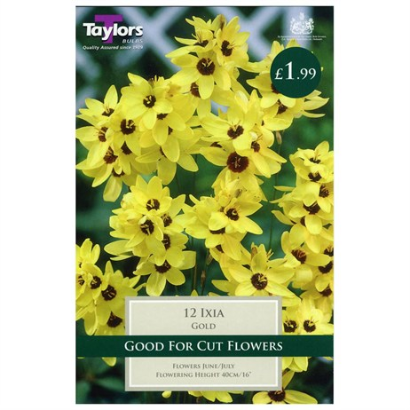 Ixia Gold (Pack of 12) - Taylors Bulbs (TS749)