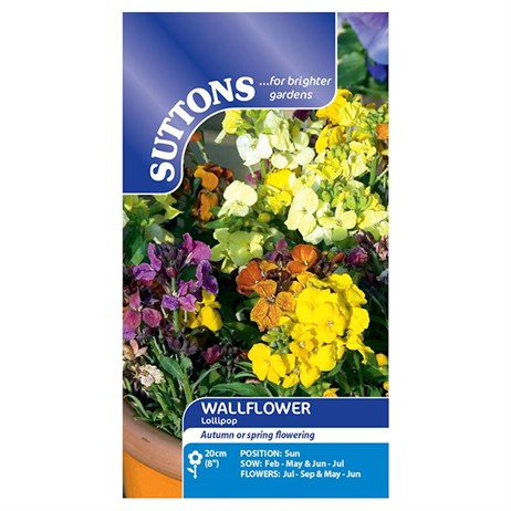 Suttons Wallflower Seeds - Lollipop (137517)