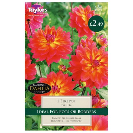 Dahlia Firepot (Single) - Taylors Bulbs (TS448)