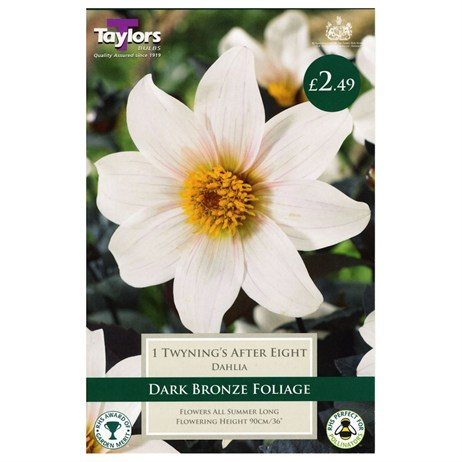 Taylors Bulbs Dahlia Twyning's After Eight (Single Pack) (TS304)