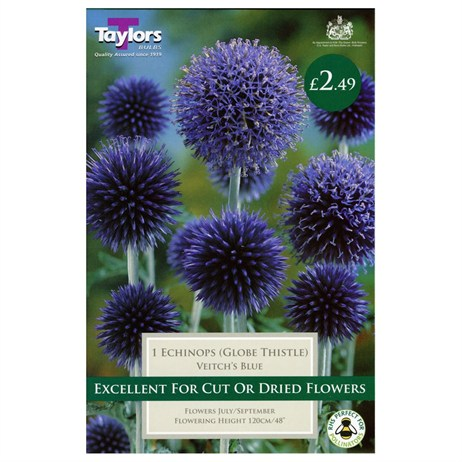 Taylors Bulbs Echinops Veitch's Blue (Single Pack) (TS826)