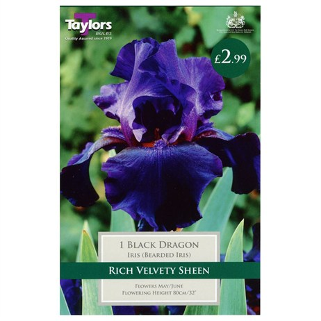 Taylors Bulbs Iris Black Dragon (Single Pack) (TS851)