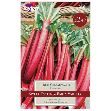 Taylors Bulbs Rhubarb Red Champagne (Single Pack) (SVEG17C)