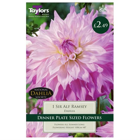 Dahlia Sir Alf Ramsey (Single) - Taylors Bulbs (TS388)