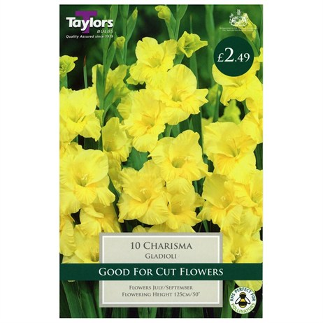 Gladioli Charisma (Pack of 10) - Taylors Bulbs (TS126)