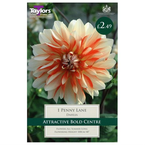 Taylors Bulbs Dahlia Penny Lane (Single Pack) (TS466)