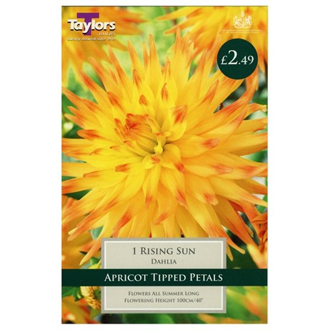 Taylors Bulbs Dahlia Rising Sun (Single Pack) (TS387)