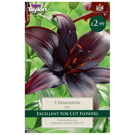 Lily Dimension (Pack of 3) - Taylors Bulbs (TS522)