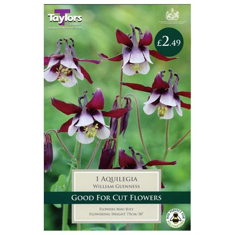 Taylors Bulbs Aquilegia William Guinness (Single Pack) (TS806)