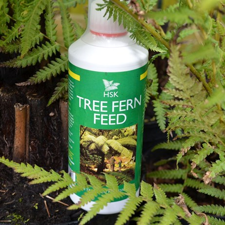 HSK Tree Fern Feed 500ml