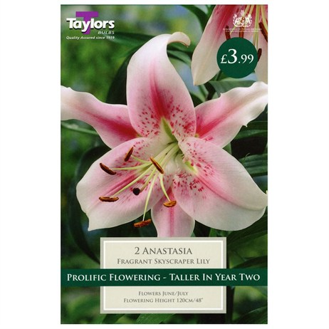 Taylors Bulbs Lily Anastasia (2 Pack) (TS511)