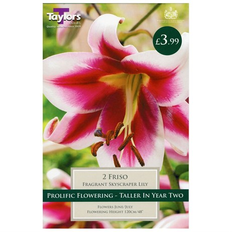 Lily Friso (Pack of 2) - Taylors Bulbs (TS512)