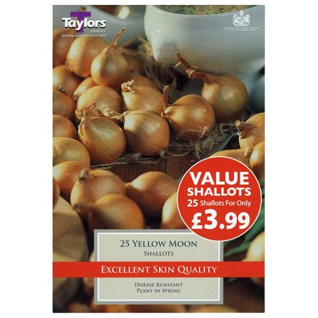 Value Shallot Yellow Moon (Pack of 25) - Taylors Bulbs (ESV350)