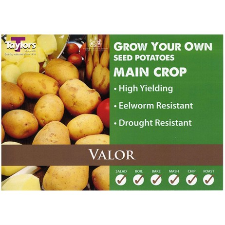 Taylors Bulbs Seed Potatoes Valor (2Kg Pack) (VAC498)