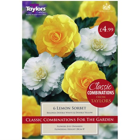 Taylors Bulbs Begonia Lemon Sorbet (6 Pack) (CC602)