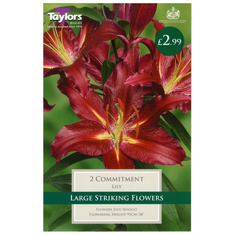 Lily Commitment (Pack of 2) - Taylors Bulbs (TS535)