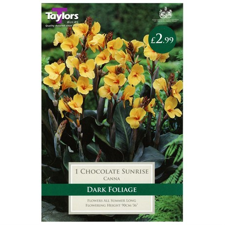 Taylors Bulbs Canna Chocolate Sunrise (Single Pack) (TS657)