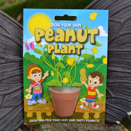 Fun Seeds - Grow Your Own: Peanut Plant