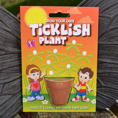 Fun Seeds - Grow Your Own: Ticklish Plant