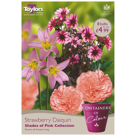 Strawberry Daiquiri (Pack of 8) - Taylors Bulbs (CKT02)