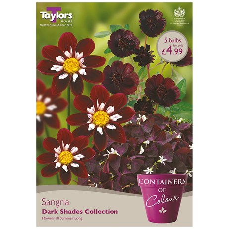 Sangria (Pack of 5) - Taylors Bulbs (CKT03)