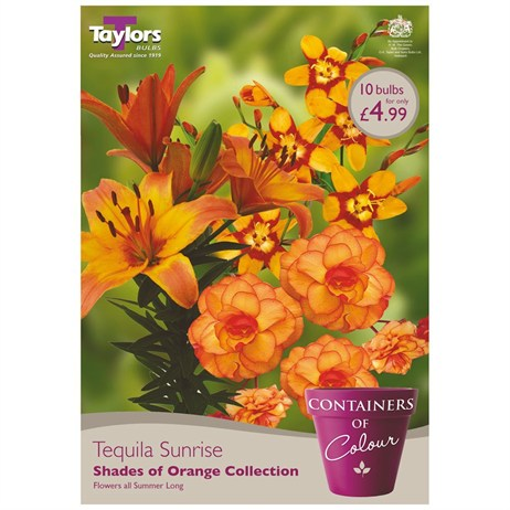 Tequila Sunrise (Pack of 10) - Taylors Bulbs (CKT04)