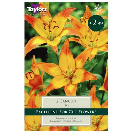 Lily Cancun (Pack of 2) - Taylors Bulbs (TS529)