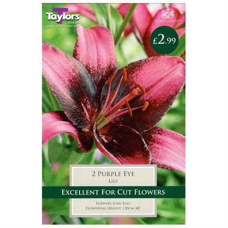 Taylors Bulbs Lily Purple Eye (2 Pack) (TS531)