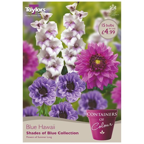 Blue Hawaii (Pack of 15) - Taylors Bulbs (CKT05)